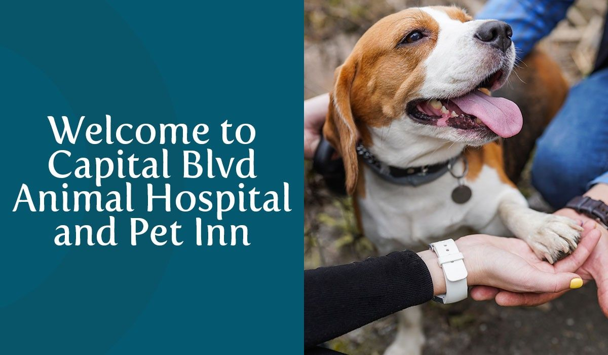 Welcome to Capital Blvd Animal Hospital & Pet Inn