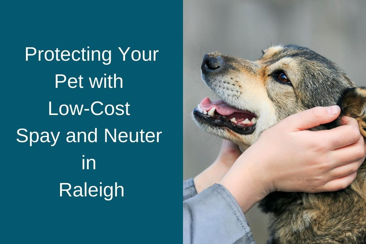 Protecting Your Pet with Low-Cost Spay and Neuter in Raleigh