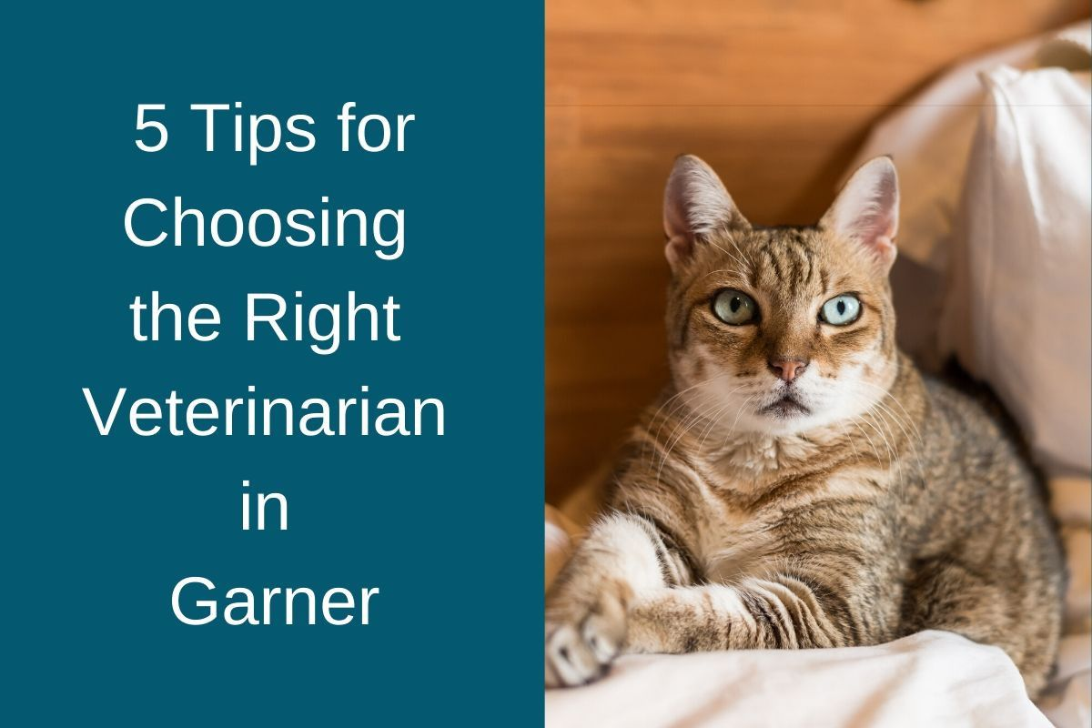 5 Tips for Choosing the Right Veterinarian in Garner